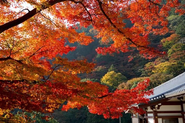 Тур с медитацией на краски осени в Японии