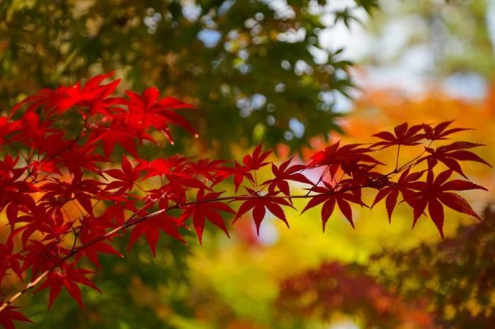 Путешествие в сердце Японии в сезон алых клёнов-момидзи